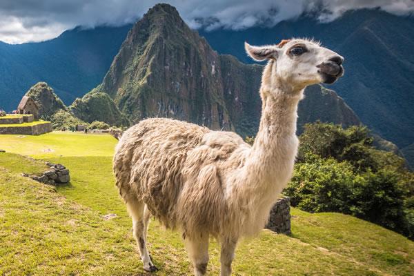 Tour a Machu Picchu 1Día